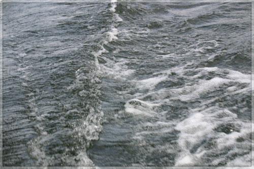 ant-bangos.jpg